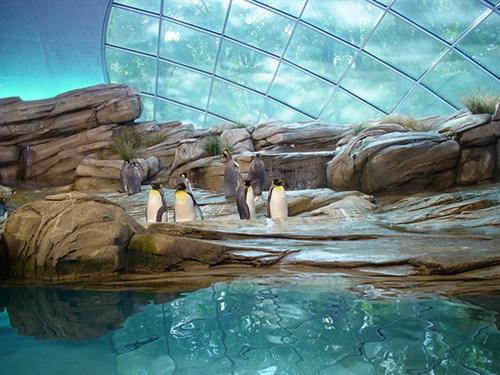 Điểm danh những vườn thú đẹp và lớn nhất thế giới - 7