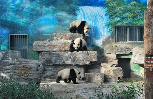 Điểm danh những vườn thú đẹp và lớn nhất thế giới - 6