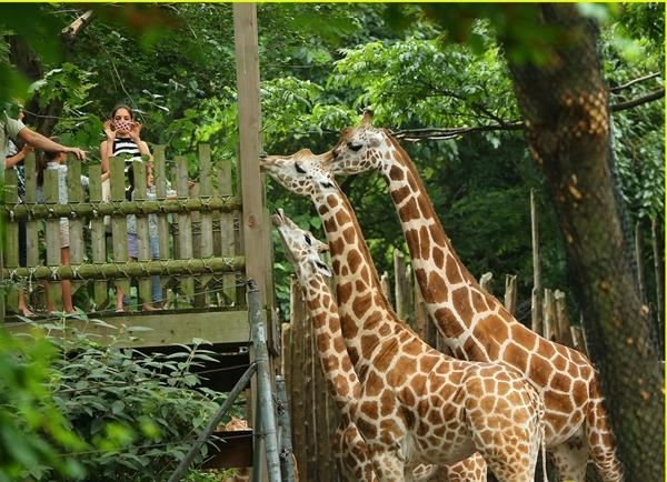 Điểm danh những vườn thú đẹp và lớn nhất thế giới - 5
