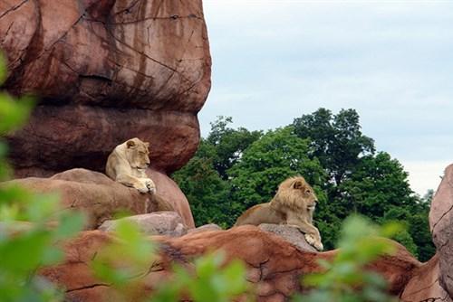 Điểm danh những vườn thú đẹp và lớn nhất thế giới - 4