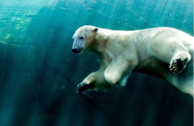 Điểm danh những vườn thú đẹp và lớn nhất thế giới - 2