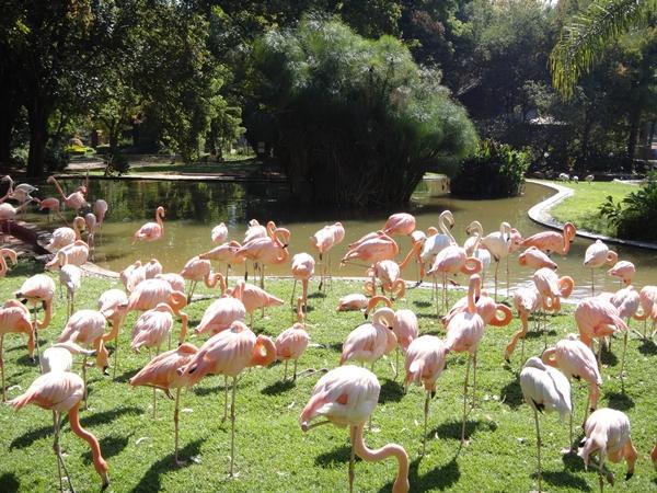 Điểm danh những vườn thú đẹp và lớn nhất thế giới - 1