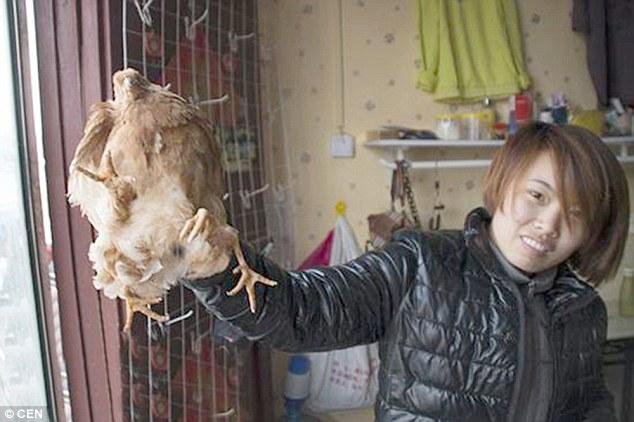 Những giống gà độc nhất vô nhị gây xôn xao - 1