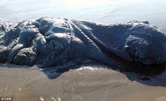 """""""Thủy quái"""" bầy nhầy dạt bờ biển Mexico - 2"""