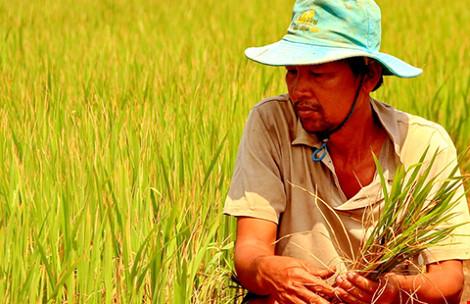 Lo thiếu gạo, thủy sản xuất khẩu - 2