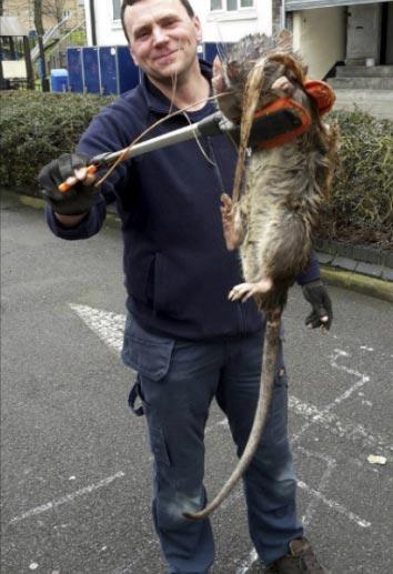 Phát hiện chuột to bằng bé 4 tuổi - 1