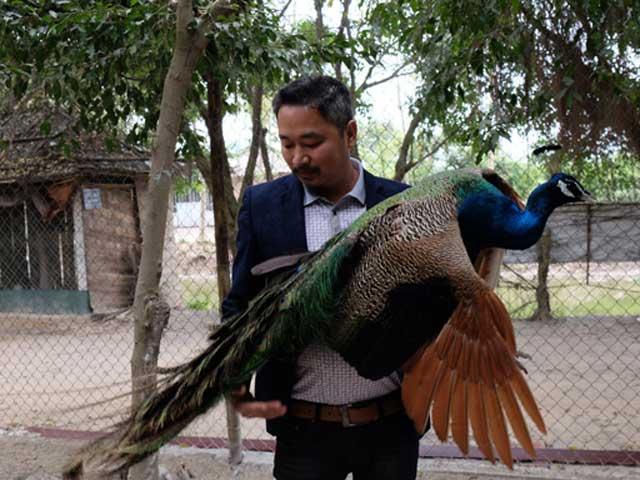 Độc đáo vườn chim quý giữa Hà thành - 1