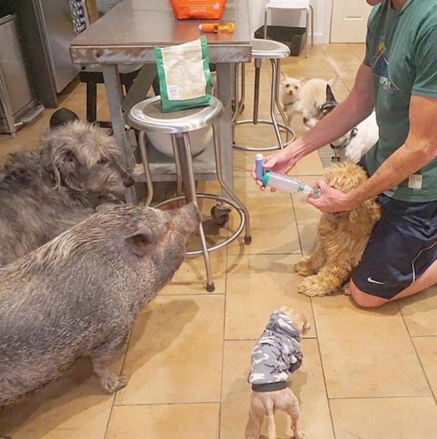 Người đàn ông Mỹ cưu mang cả đàn thú nuôi trong nhà - 4