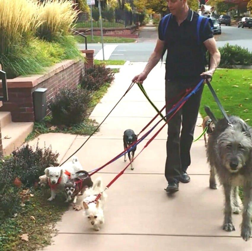 Người đàn ông Mỹ cưu mang cả đàn thú nuôi trong nhà - 5