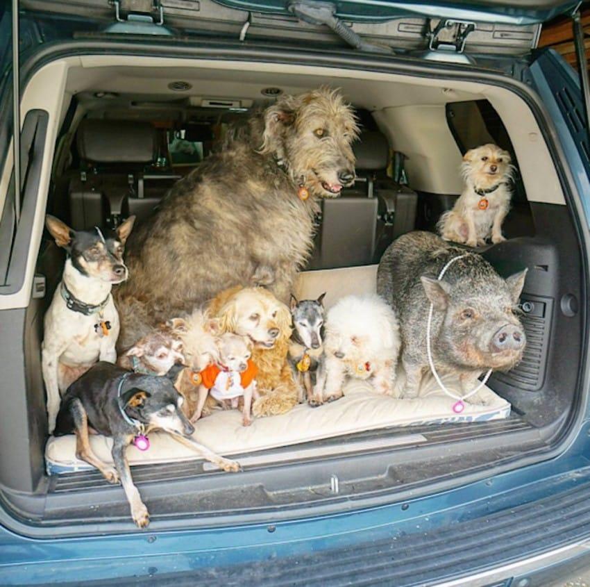Người đàn ông Mỹ cưu mang cả đàn thú nuôi trong nhà - 8