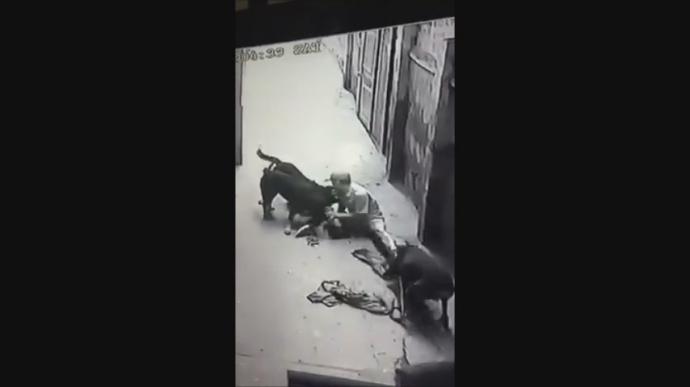 """Video: Đàn chó dữ """"làm phản"""", lao vào cắn xé chủ nhân - 1"""
