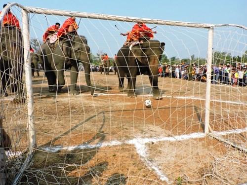 Cuồng nhiệt xem voi Buôn Đôn tung chân đá bóng - 1