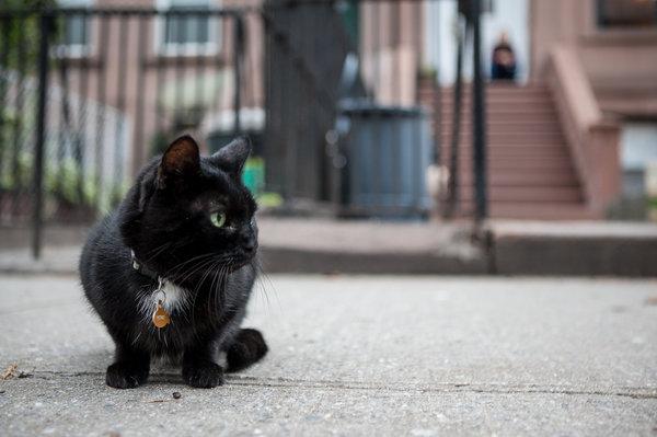 """Một ngày của """"thị trưởng"""" mèo tại khu phố nhỏ ở Mỹ - 1"""