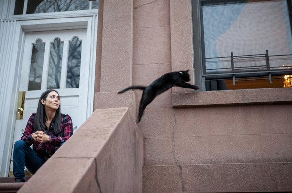 """Một ngày của """"thị trưởng"""" mèo tại khu phố nhỏ ở Mỹ - 2"""