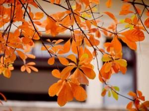Tin tức trong ngày - Ảnh: Hồ Gươm mùa lộc vừng thay lá
