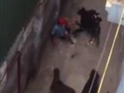 Tin tức Việt Nam - 4 con chó Tây hung hãn cắn chủ qua lời kể nhân chứng