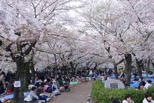 Chiêm ngưỡng vẻ đẹp mùa hoa anh đào tại miền Trung Nhật Bản - 3