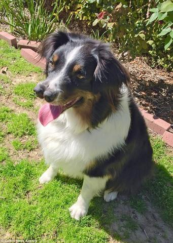 Chú chó 2 mũi kì lạ ở Mỹ - 4