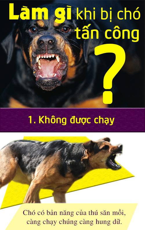 [Infographic] Cách xử lý tình huống khi chó dữ tấn công - 1