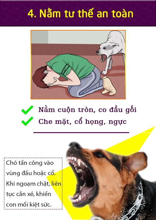 [Infographic] Cách xử lý tình huống khi chó dữ tấn công - 3