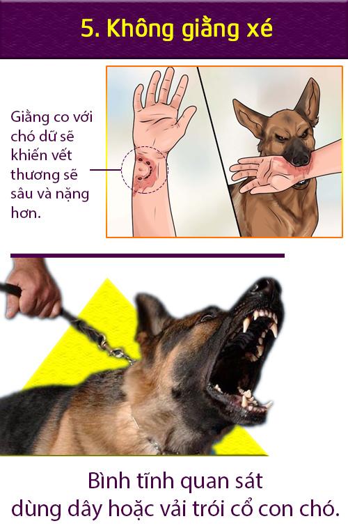 [Infographic] Cách xử lý tình huống khi chó dữ tấn công - 4