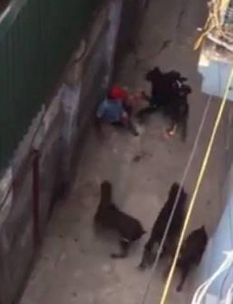 4 con chó Tây cắn người trên phố có bị tịch thu? - 1