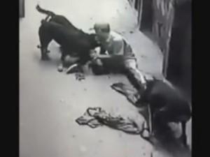 """Tin tức Việt Nam - Chuyên gia lý giải nguyên nhân đàn chó Tây """"phản chủ"""""""