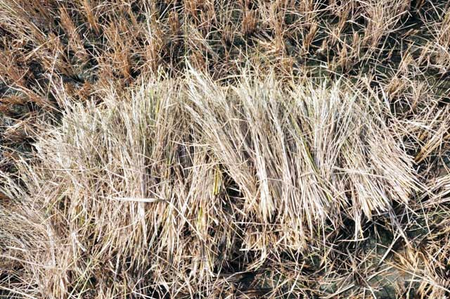 Ảnh: Ruộng nứt toác, mặn chát, lòng dạ như bị xát muối - 8