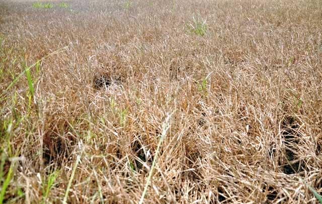 Ảnh: Ruộng nứt toác, mặn chát, lòng dạ như bị xát muối - 3