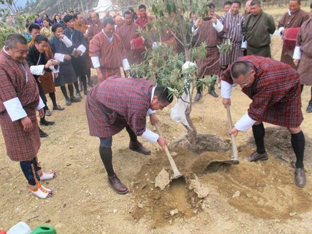 Hoàng tử mới sinh, dân Bhutan trồng 10 vạn cây ăn mừng - 2