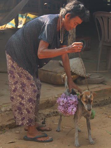 Cụ bà 80 tuổi luyện chó đi giao hàng - 1