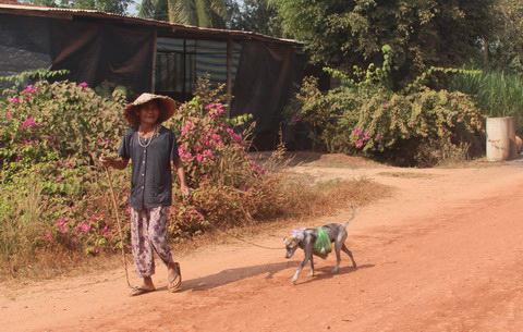 Cụ bà 80 tuổi luyện chó đi giao hàng - 3