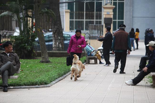"""Chó dữ """"ngông nghênh"""" đi lại khắp Thủ đô - 6"""