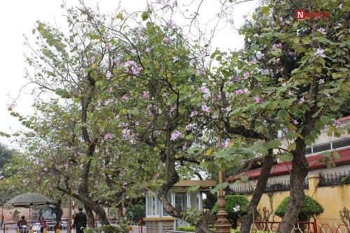 Hà Nội tháng 3- thành phố mùa hoa đẹp nhất miền Bắc - 7