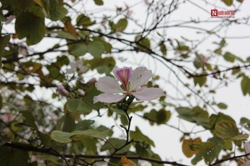 Hà Nội tháng 3- thành phố mùa hoa đẹp nhất miền Bắc - 8