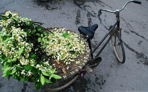 Hà Nội tháng 3- thành phố mùa hoa đẹp nhất miền Bắc - 2