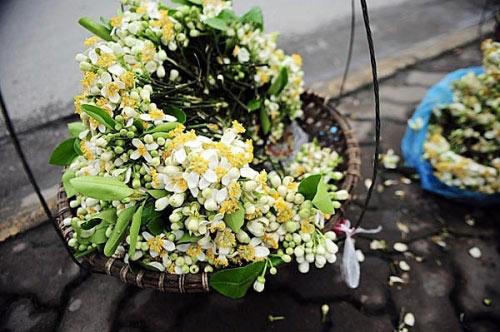 Hà Nội tháng 3- thành phố mùa hoa đẹp nhất miền Bắc - 5