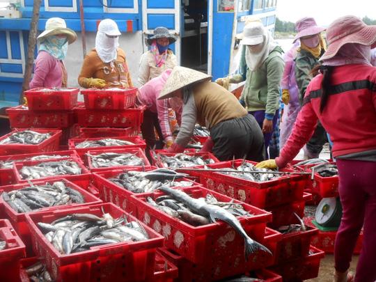 Trúng đậm luồng cá, ngư dân Lý Sơn kiếm cả trăm triệu đồng - 2