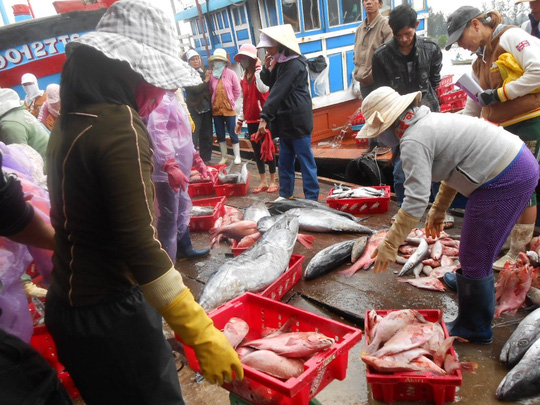 Trúng đậm luồng cá, ngư dân Lý Sơn kiếm cả trăm triệu đồng - 1