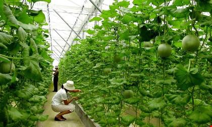 Vốn Nhật đổ mạnh vào nông nghiệp Việt Nam - 1