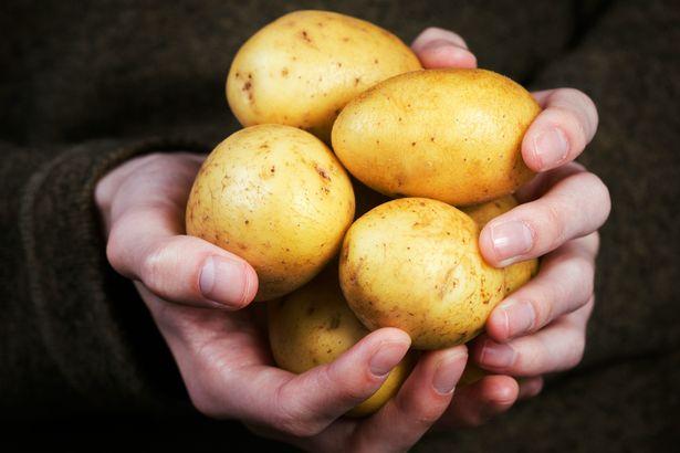 Tuyệt đối không nên bảo quản khoai tây trong tủ lạnh - 1