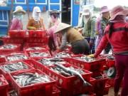 Thị trường - Tiêu dùng - Trúng đậm luồng cá, ngư dân Lý Sơn kiếm cả trăm triệu đồng