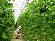 Thị trường - Tiêu dùng - Vốn Nhật đổ mạnh vào nông nghiệp Việt Nam