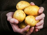 Sức khỏe đời sống - Tuyệt đối không nên bảo quản khoai tây trong tủ lạnh