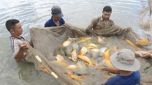 Điểm mặt những món ăn đắt nhất Việt Nam - 8