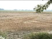 Video An ninh - Nông dân miền Tây kiệt quệ vì hạn hán, ngập mặn