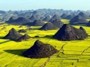"""Du lịch - Sững sờ trước cánh đồng """"hoa cưỡng bức"""" vàng rực ở TQ"""