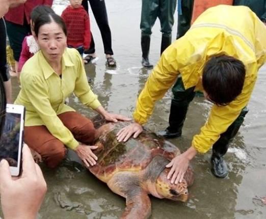 Từ chối hàng trăm triệu, ngư dân thả rùa quý xuống biển - 1