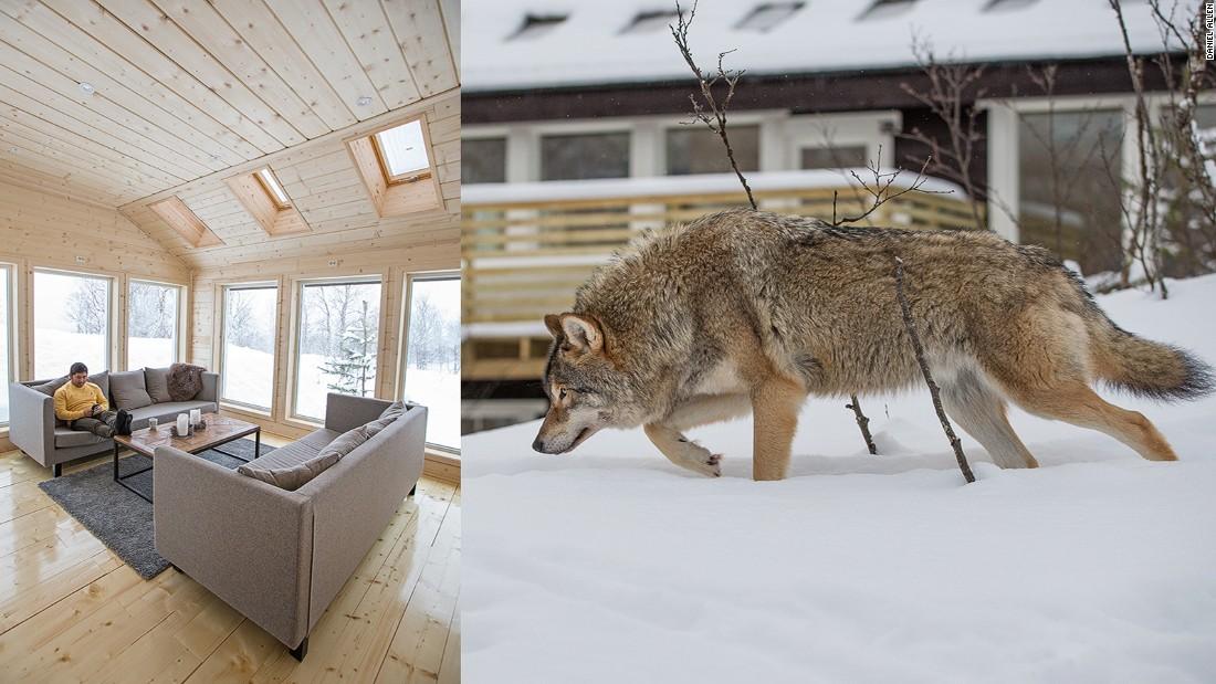 Ở nơi du khách được hôn chó sói - 2