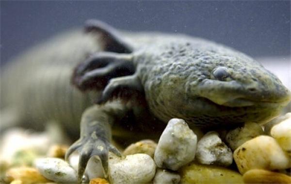 Những loài động vật biển kỳ lạ nhất Trái Đất - 5